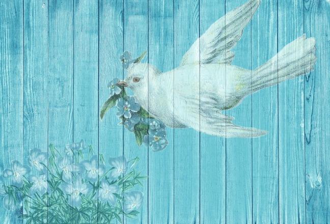 dove-1861791_960_720